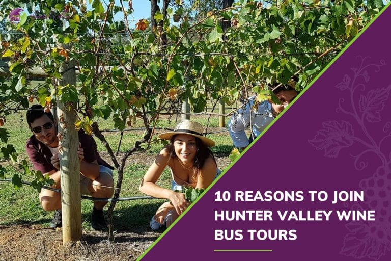 reasons to join hunter valley wine bus tours