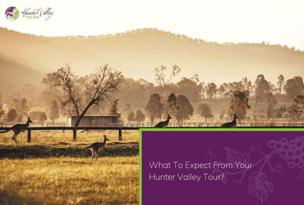 Wine Tour - Hunter Valley Wine Tours