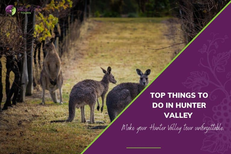 Top Things to Do in Hunter Valley