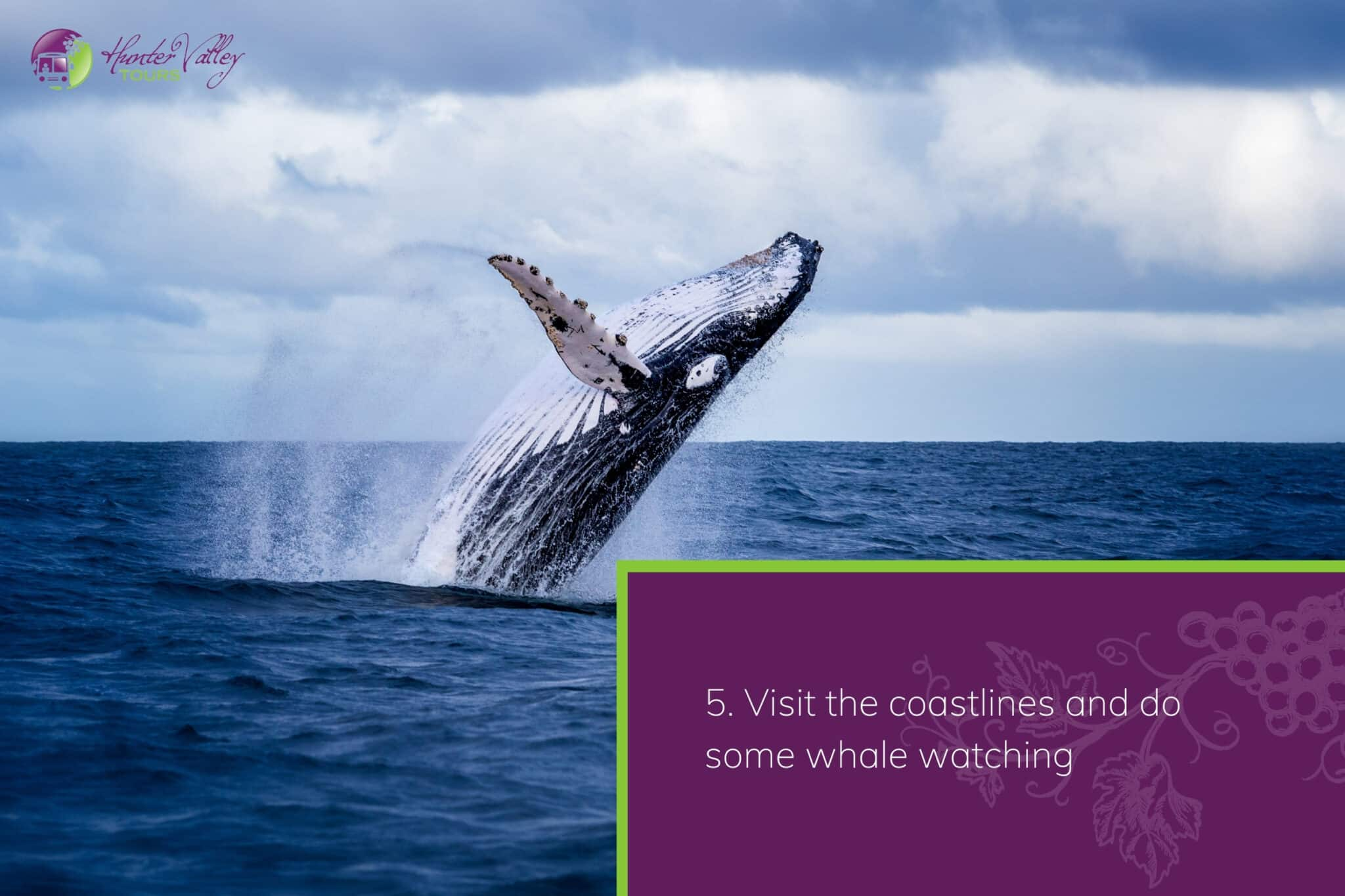 Visit the coastlines and do some whale watching