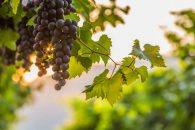 Wine Tasting Tours, Accessible Tour, Hunter Valley Tours