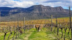 Accommodation - Hunter Valley Tours